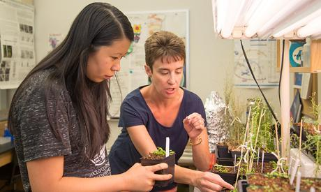 Julia Burns '16 works with Amy Hark to understand the role of GCN5 in the control of Arabidopsis trichome morphogenesis